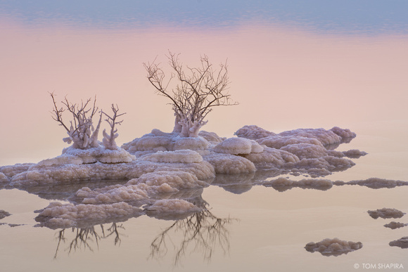 Photo of dry vegetation in the Dead Sea in Israel by photographer Tom Shapira