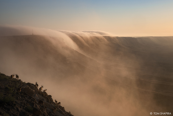 Ramon Crater, Summer's Fog (4)