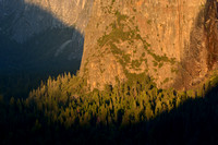 Trees on Sunset in Yosemite Valley