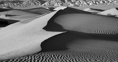 Mesquite Dunes #9